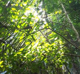 Manuel Antonio National Park on a budget